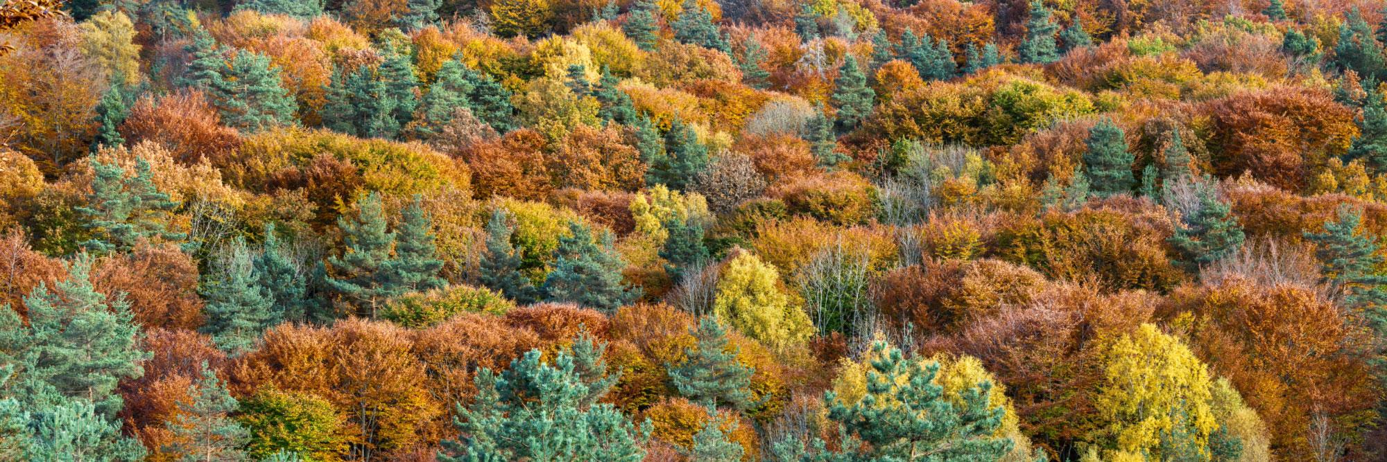 Forêt, Mont de la Madeleine, près de la Chabanne