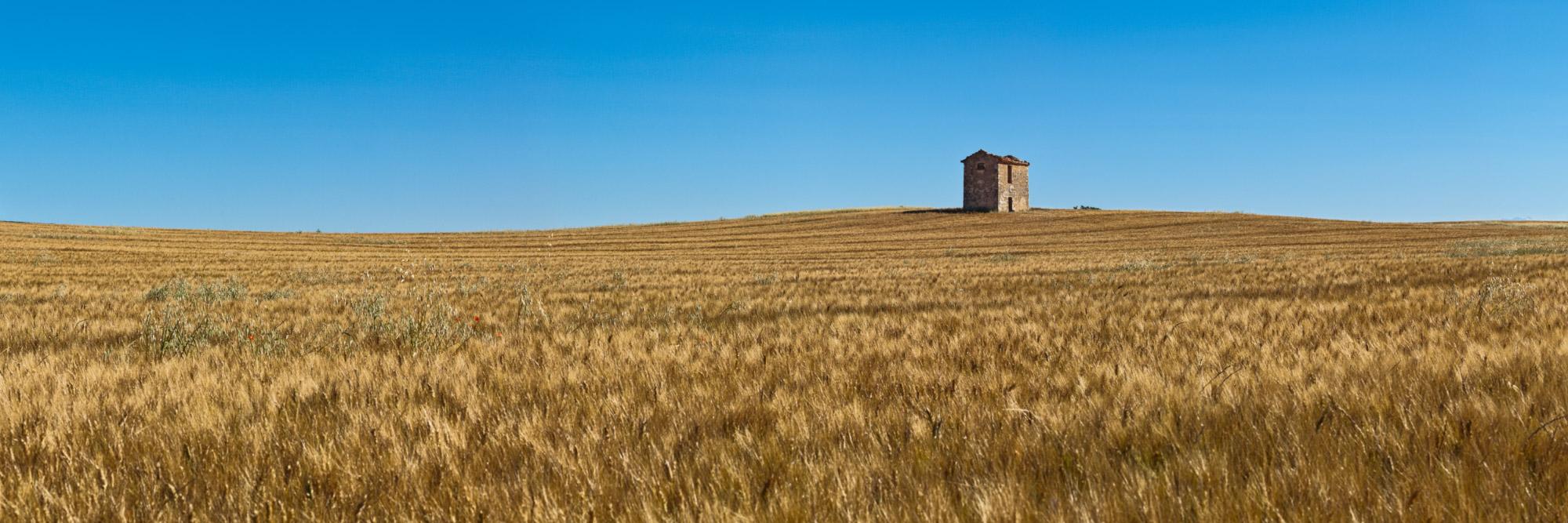 Cabane dans un champ de céréales, plateau de Valensole