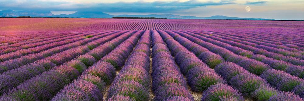 13581-france-Alpes-de-Haute-Provence-Lavandes-plateau-de-Valensole-panorama-sentucq