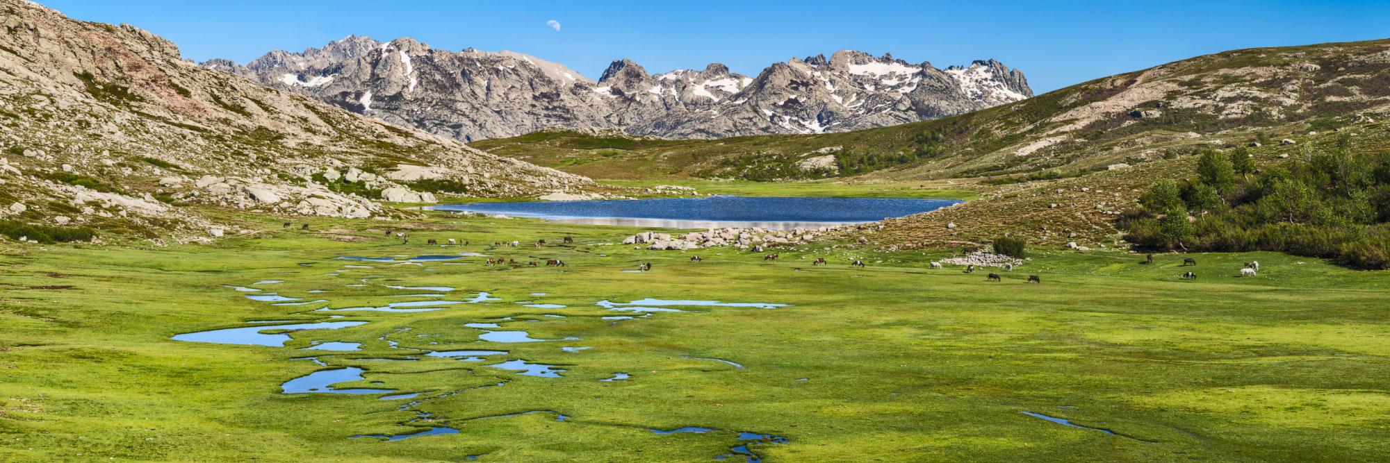 Chevaux, pozzines du lac de Nino