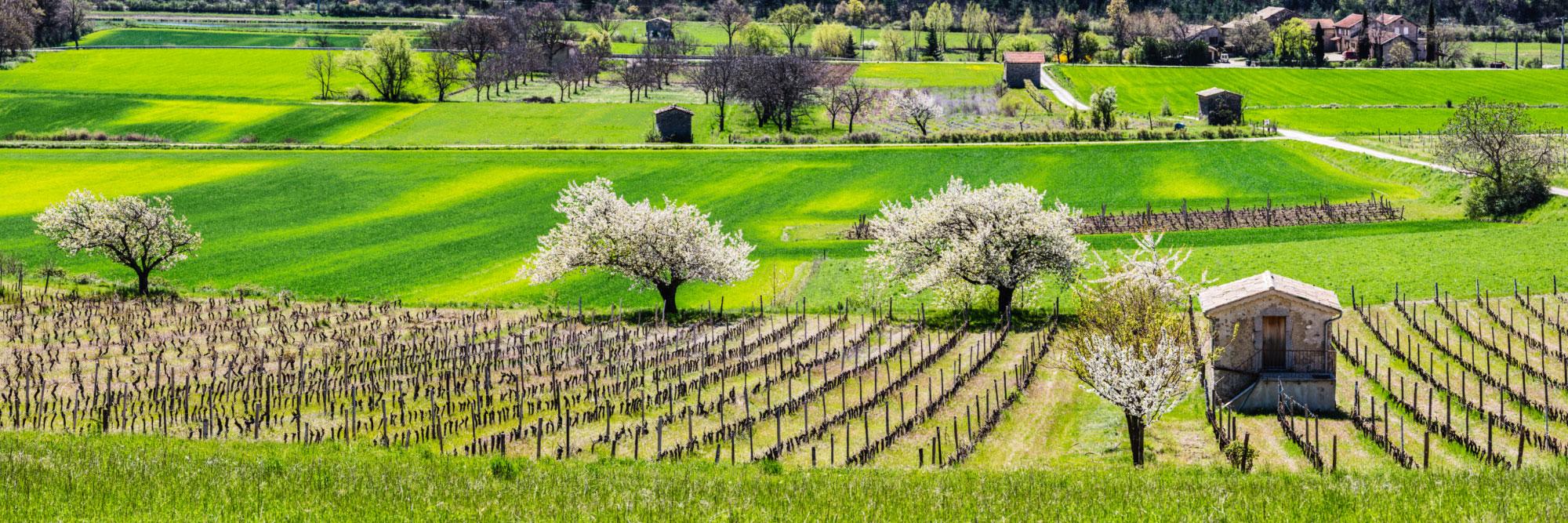Cerisiers en fleurs, Châtillon-en-Diois