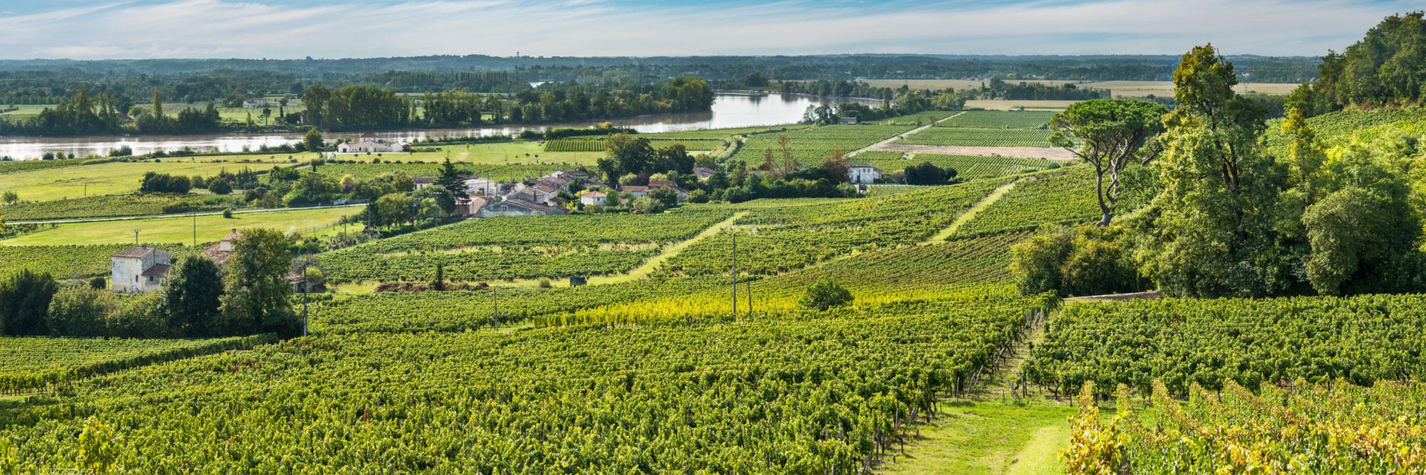 La Dordogne bordée par les vignobles de Fronsac, libournais