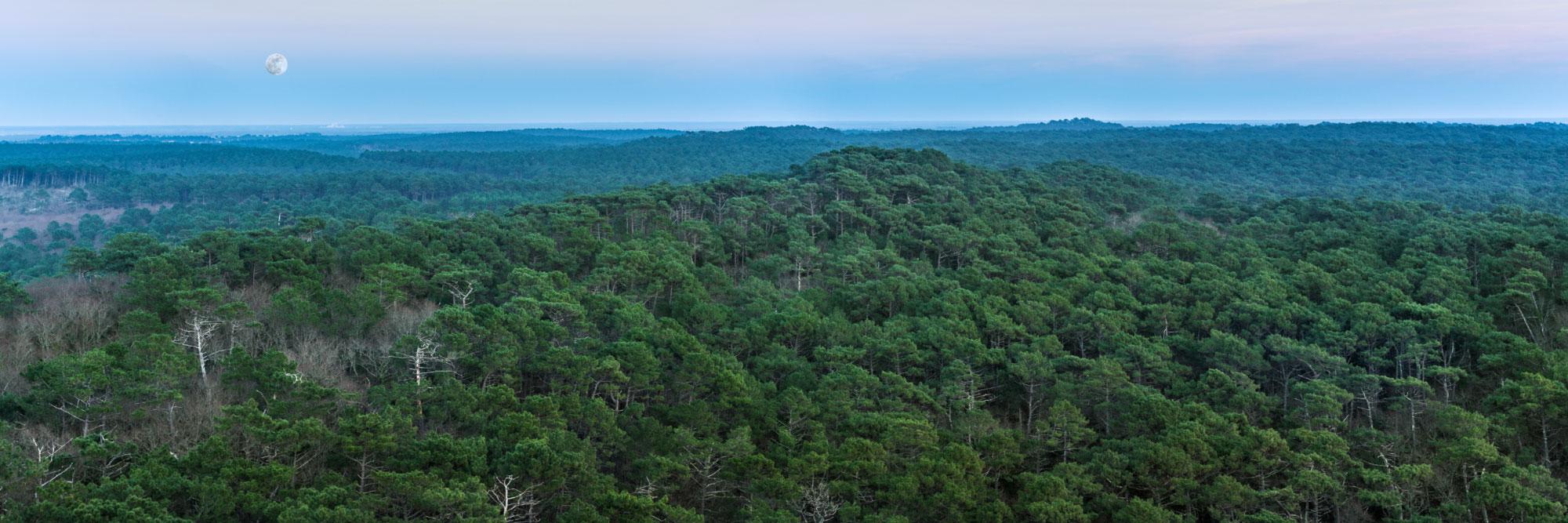 Forêt des Landes vu du haut de la dune du Pyla, côte Atlantique