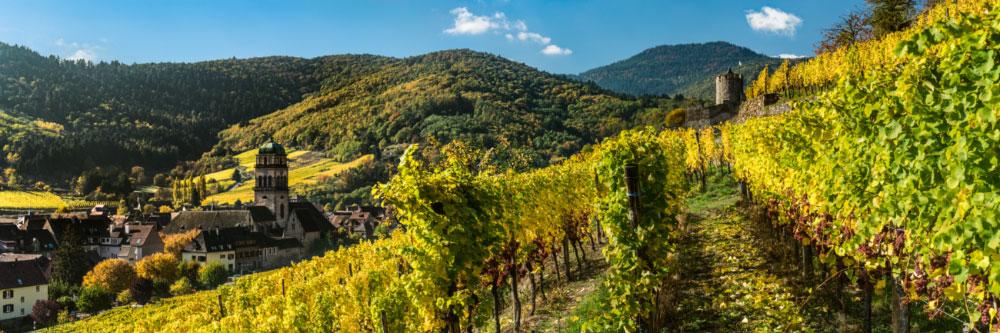 16002 Vignoble de Kaysersberg dominé par son château, Vosges, Alsace, Haut-Rhin