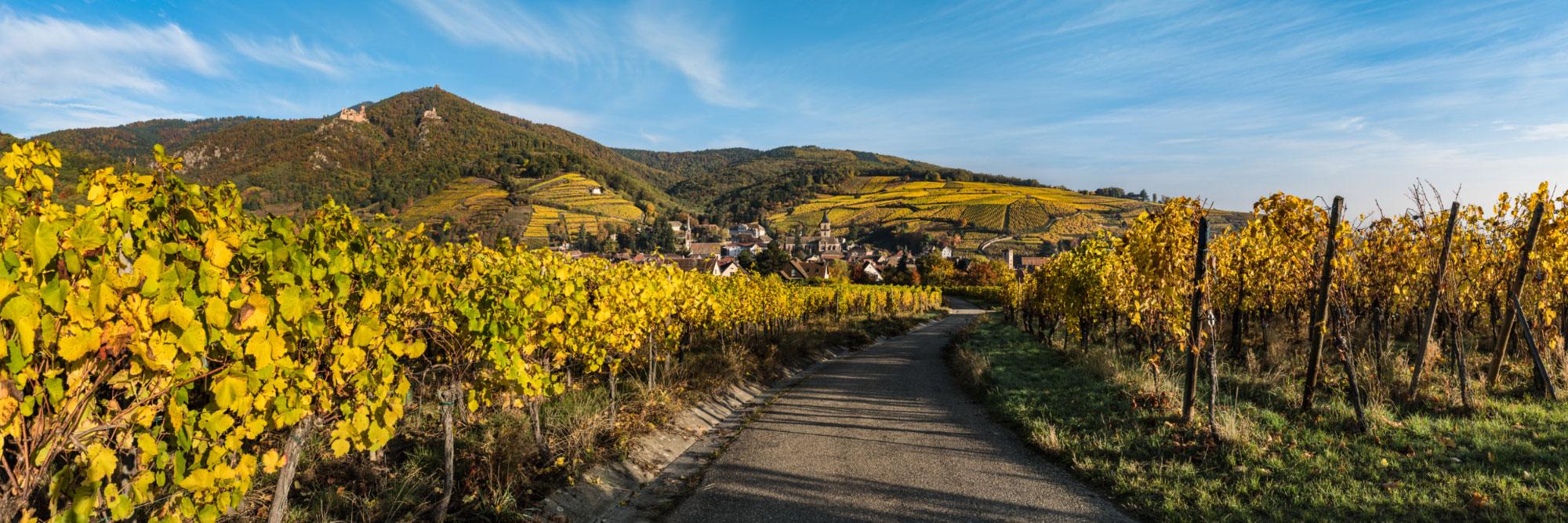 Route des vins d'Alsace, Ribeauvillé, dominé par les châteaux de Saint-Ulrich et de Girsberg et le donjon du Haut-Ribeaupierre, Vosges