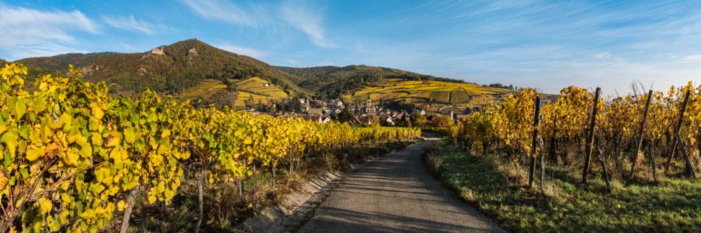 16021 Route des vins d'Alsace, Ribeauvillé, dominé par les châteaux de Saint-Ulrich et de Girsberg et le donjon du Haut-Ribeaupierre, Vosges, Haut-Rhin