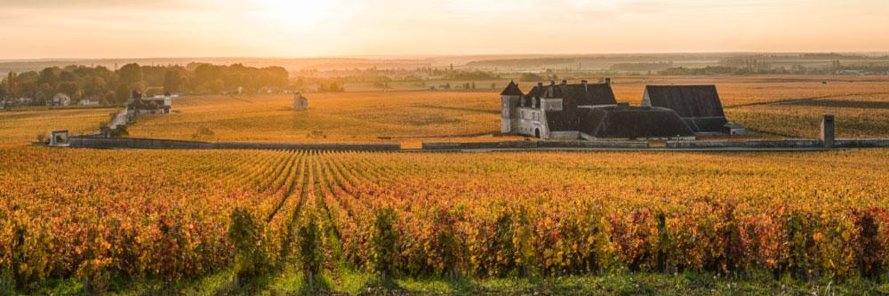 16062 Vignoble du Clos-de-Vougeot (Côte-d'Or), Octobre