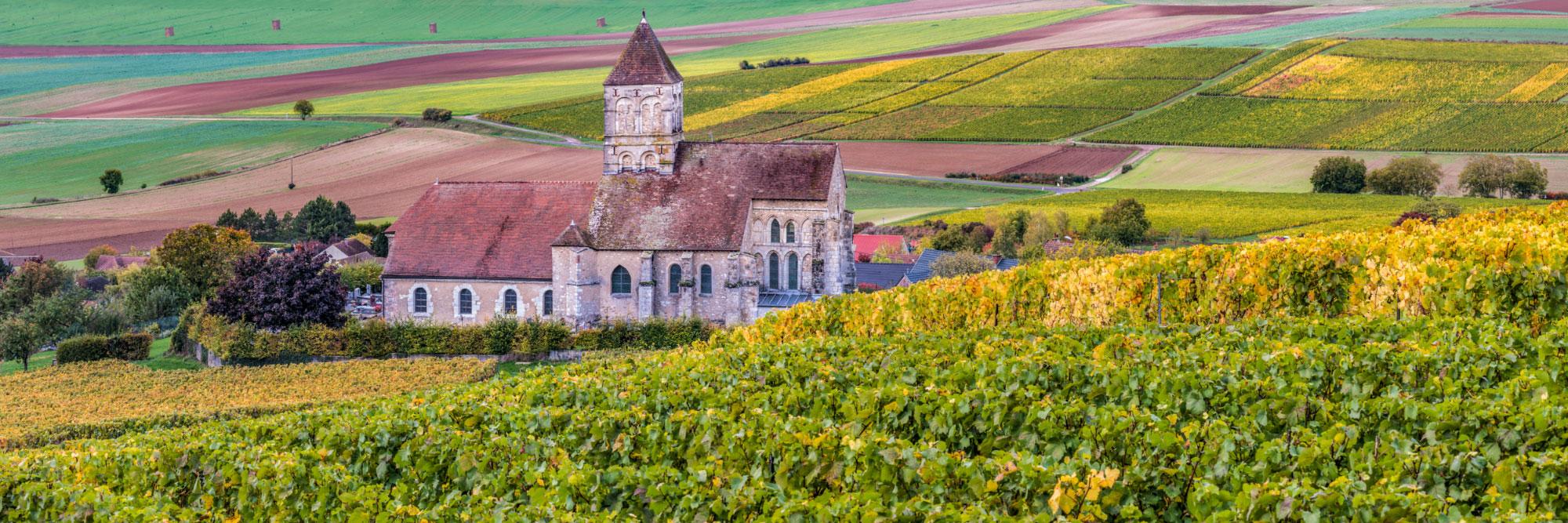 Cuis, vignobles de la côte des Blancs au sud d'Epernay