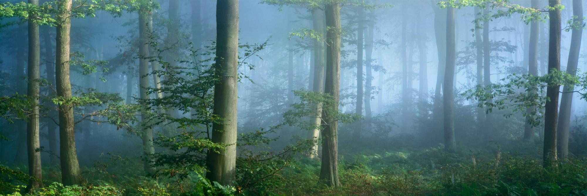 Forêt de Brotonne, Vallée de la Seine