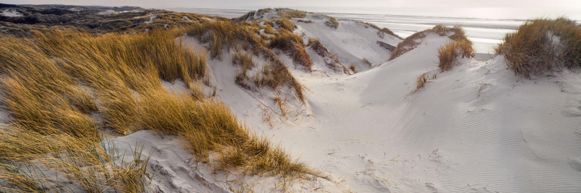 Dunes de Quend, parc du Marquenterre