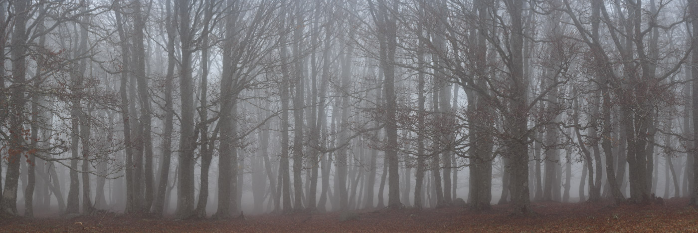 Forêt dans la brume, Aubrac