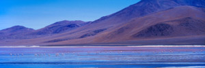 Herve Sentucq - Flamants roses, Laguna Colorada